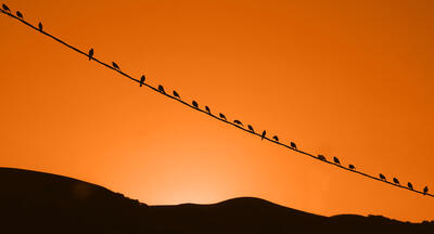 Silhouette of  birds sitting on a wire with a bright orange sky